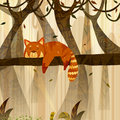 Wild animal Red Panda in jungle forest background