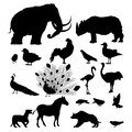 Wild animal silhouettes large silhouette set of animals and birds over white background Stock Images