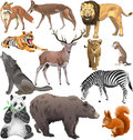 Wild animals set of different Royalty Free Stock Image