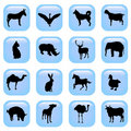 Wild animals vector Stock Image