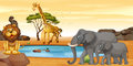 Wild animals by the waterhole