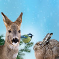 Wild animals at winter time Stock Image