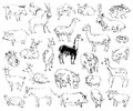 Wild animals zoo set hand drawn Stock Images