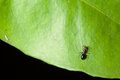 Wild ant macro shot of an crawling over a green leaf Stock Photos