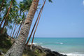Wild beach on sri lanka coast Stock Images