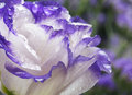 Wild beautiful flower after rain closeup Stock Photos