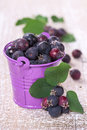 Wild berries in a bucket on an old wooden board Stock Image