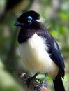 Wild bird in the jungle Royalty Free Stock Photo
