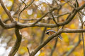 Wild bird it is the that stop on a tree in autumn Stock Image