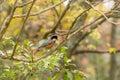 The wild bird tha that stop on a tree in autumn Royalty Free Stock Photo
