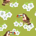 Wild bird toucan on flowering branch Royalty Free Stock Image