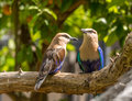 Wild birds colorful sitting on a branch Stock Image