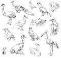 Wild birds zoo set hand drawn Stock Photo