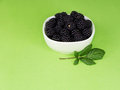 Wild blackberries free food fresh picked with copyspace Stock Photo