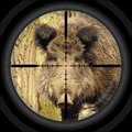 Wild boar hunt shooting cross hair photo montage of illustrated hairs and photo Royalty Free Stock Image