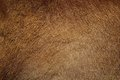 Wild boar pelt closeup of textured Stock Photo