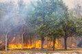 Wild Bush Fire