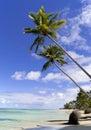 Wild caribbean beach Royalty Free Stock Photo