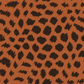 Wild cat fur abstract print seamless pattern Stock Images