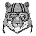 Wild cat Leopard Cat-o`-mountain Panther wearing biker helmet Animal with motorcycle leather helmet Vintage helmet for