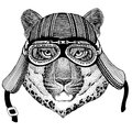 Wild cat Leopard Cat-o`-mountain Panther Wild animal wearing biker motorcycle aviator fly club helmet Illustration for