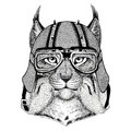 Wild cat Lynx Bobcat Trot wearing biker helmet Animal with motorcycle leather helmet Vintage helmet for bikers Aviator
