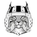 Wild cat Lynx Bobcat Trot Wild animal wearing rugby helmet Sport illustration