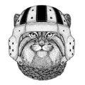 Wild cat Manul Wild animal wearing rugby helmet Sport illustration
