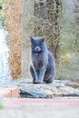 Wild cat resting on the wall in the city center Royalty Free Stock Photo