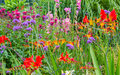 Wild country garden flowers a multitude of and domestic in a Stock Photography