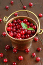 Wild cranberries in little brass bucket pail full of red on wet wooden background Royalty Free Stock Images