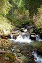 Wild creek Royalty Free Stock Photo