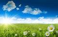 Divoký sedmikrásky v tráva modrá obloha