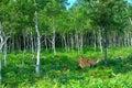 Wild deers in the woods Stock Photos