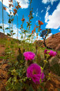 Wild Desert Flowers Blossoms Utah Landscape Vertical Composition Royalty Free Stock Photo
