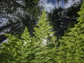 Wild ferns Royalty Free Stock Photo