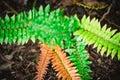 Wild Ferns. Forest Vegetation Macro Photography.