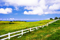 Wild field of Hawaii Royalty Free Stock Photo