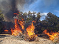 Wild fire a burning in a pinyon juniper shrub land Royalty Free Stock Photos