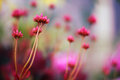 Wild flower and bokeh red with surrealistic Stock Photography