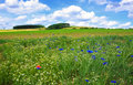 Wild flower field in the sunny summer day.