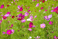 Wild flower meadow Royalty Free Stock Photo