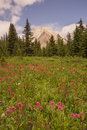 Wild Flower Meadow and Gusty Peak Royalty Free Stock Photo