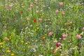 Wild flower meadow Royalty Free Stock Photo