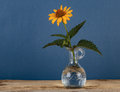 Wild flower in a vase Royalty Free Stock Photo