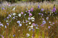 In the wild flowers australian countryside Royalty Free Stock Images