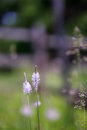 Wild flowers blooming in the green grassy meadow at ranch rural scene Royalty Free Stock Photo