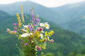 Wild flowers bouquet over mountains. Royalty Free Stock Photo