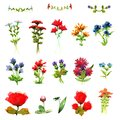 Wild flowers bouquets beautiful summer colorful bright garden floral fragrance watercolor paints shades pink decoration decoration