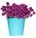 Wild flowers in bucket Royalty Free Stock Photo